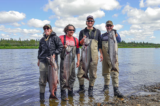 a nice batch of nushagak river salmon from the shores of the aksa lodge camp