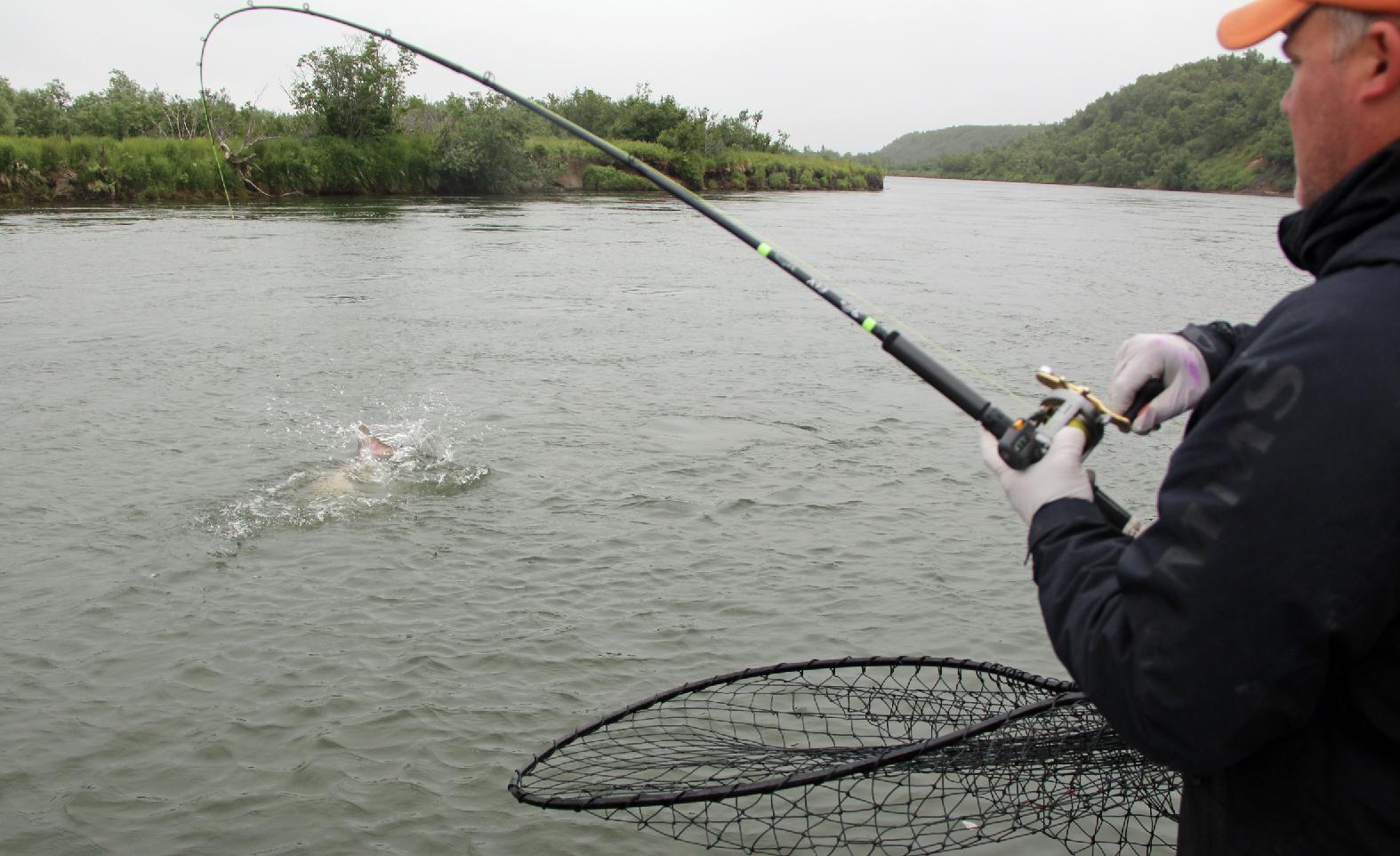Backbouncing for king salmon alaska king salmon for King salmon fishing alaska